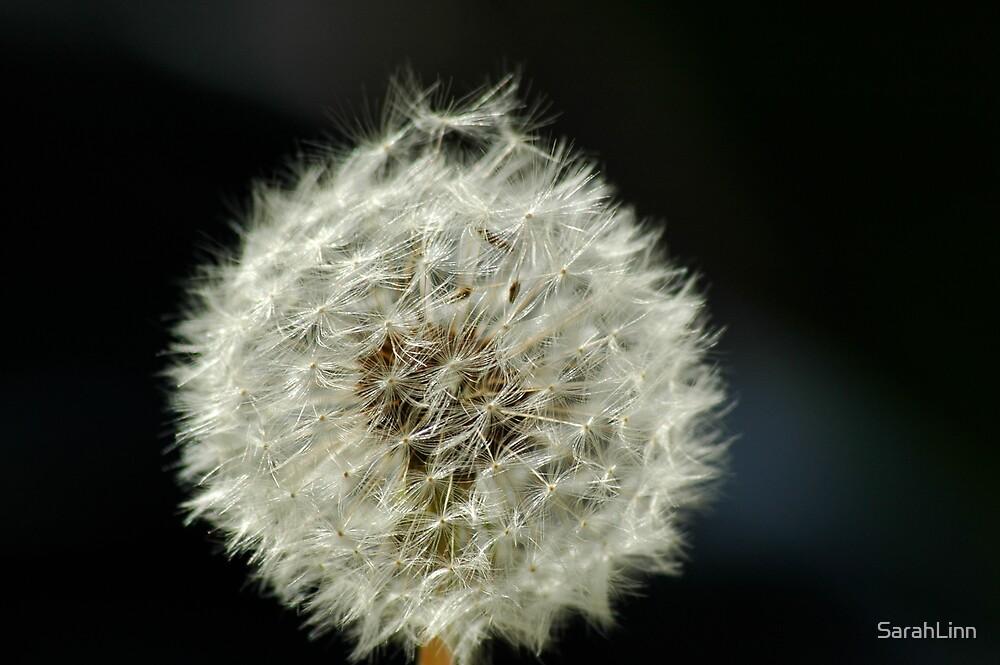 Dandelion by SarahLinn