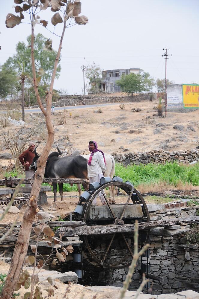 Buffalo powered irrigation  by Mottoy