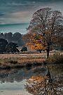 A reflection of autumn by Sara Sadler