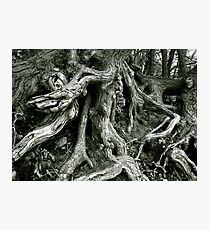 Wild Growing Tree Roots Photographic Print