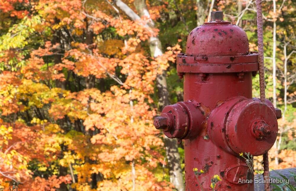 fire hydrant by Anne Scantlebury
