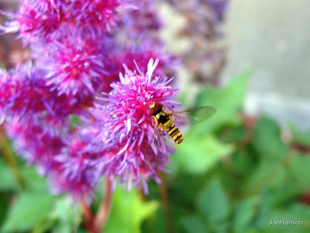 Mini Bee! by JonHanson