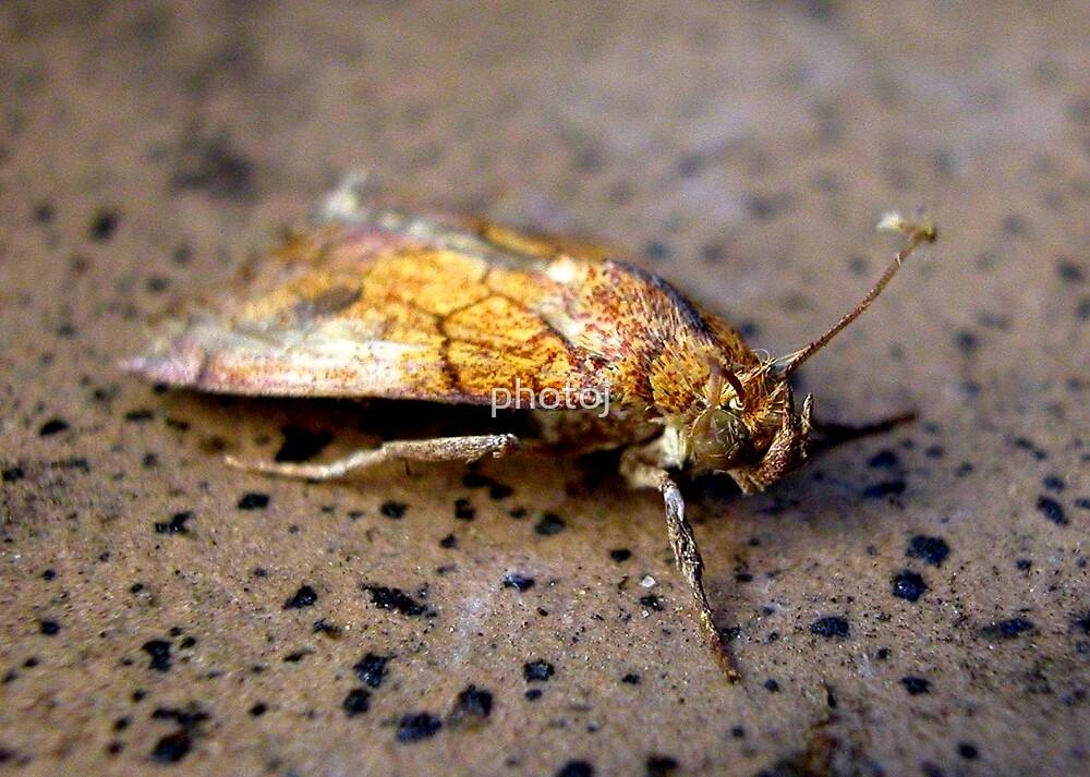 photoj macro bug-insects by photoj