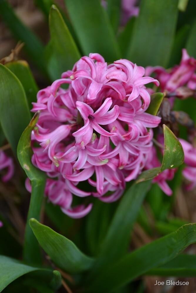 pretty in pink by Joe Bledsoe