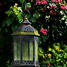 Lamp Light by Country  Pursuits