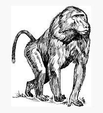 Baboon Photographic Print