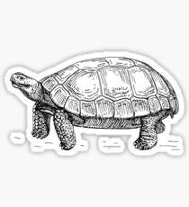 Tortoise Sticker