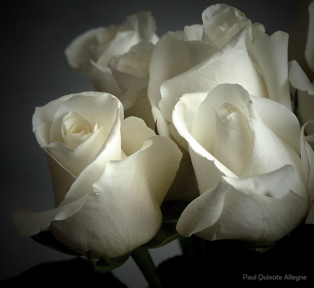 WHITE PAPER ROSES by Paul Quixote Alleyne