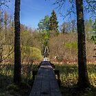 Ryfors Gammelskog pathway by João Figueiredo