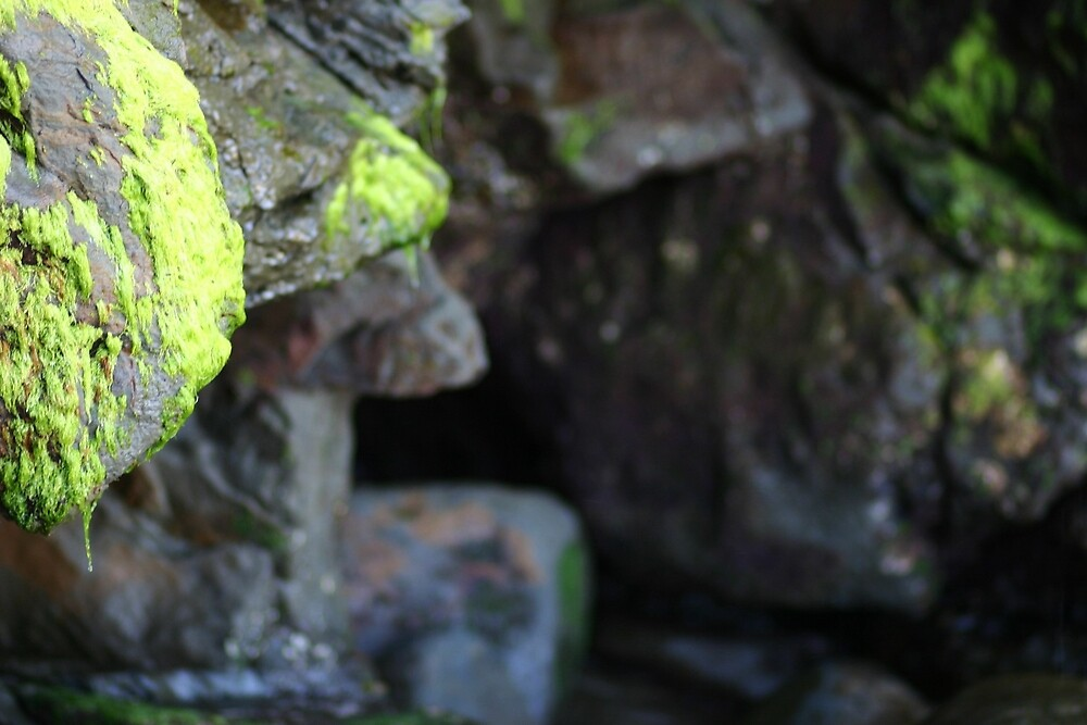 Moss on the Rocks by banncrawford