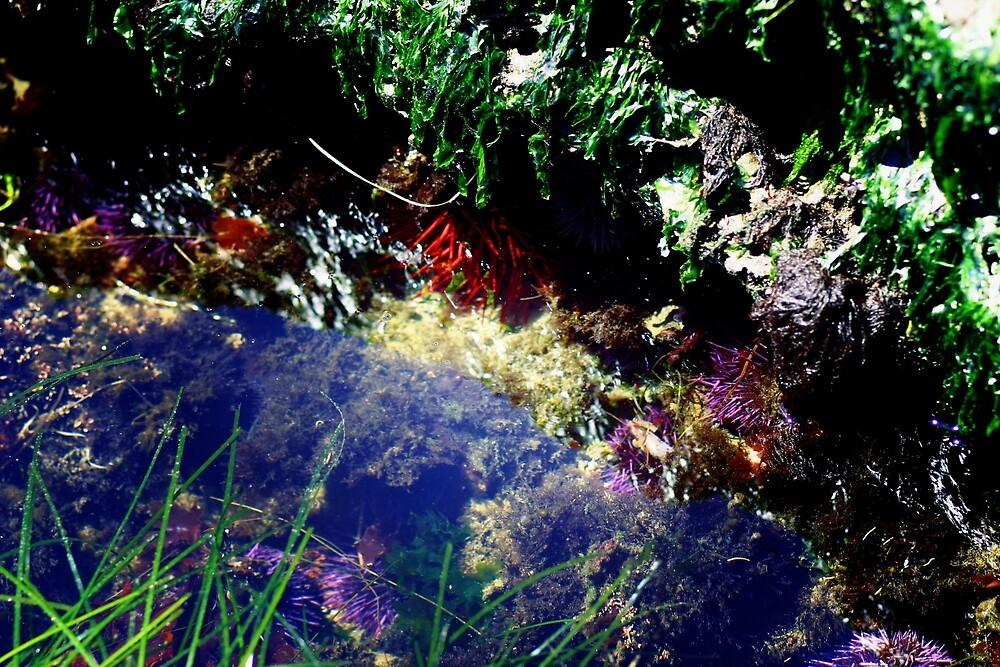 Oregon Tide Pools by banncrawford
