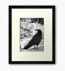 Quoth Framed Print