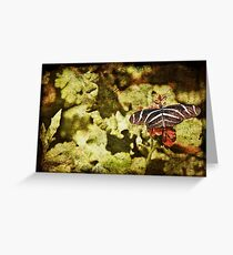 Dark View of Butterfly Greeting Card