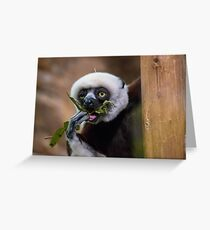 Zoboomafoo on Lunch Break Greeting Card