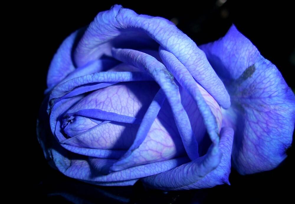 Blue Flower 2 by Yvonne Carsley