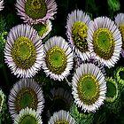 FloralFantasia 03 by Charles Oliver