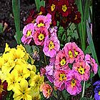 FloralFantasia 05 by Charles Oliver