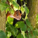 Peeking by Dominika Aniola