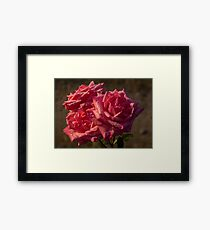 From My Mother's Garden - Three Fabulous Old Fashioned Sweetheart Roses Framed Print