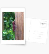 Caterpiller Postcards