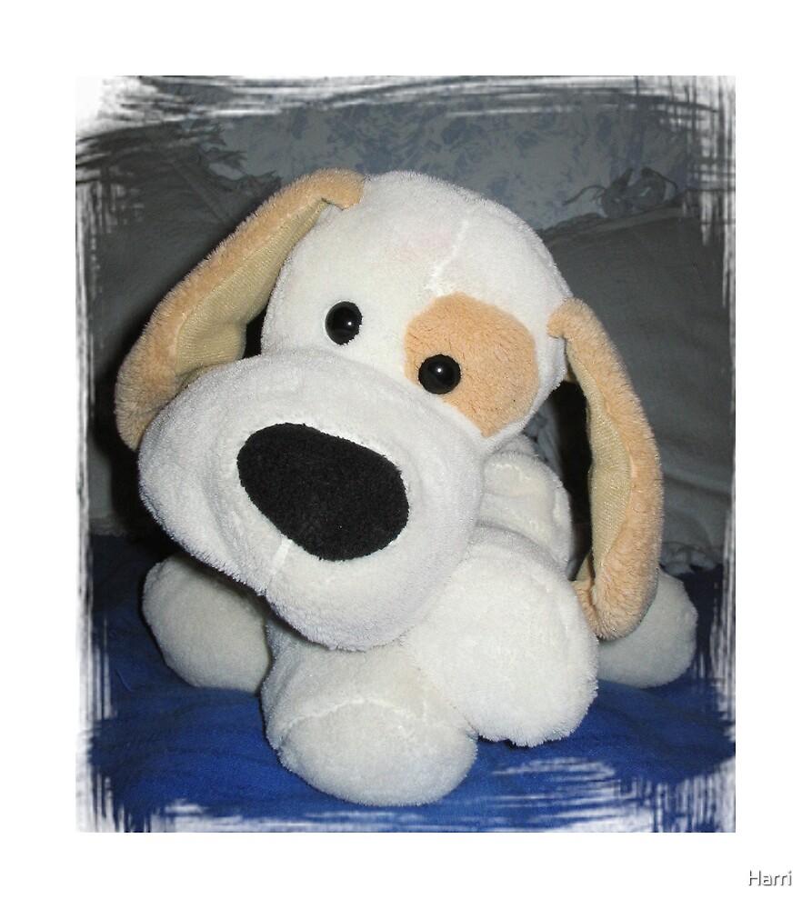 Puppy by Harri