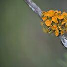 Fungi by palmerphoto
