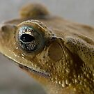 Toad2 by palmerphoto
