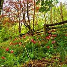 Fresh and Colorful Hillside - Impressions Of Spring by Georgia Mizuleva