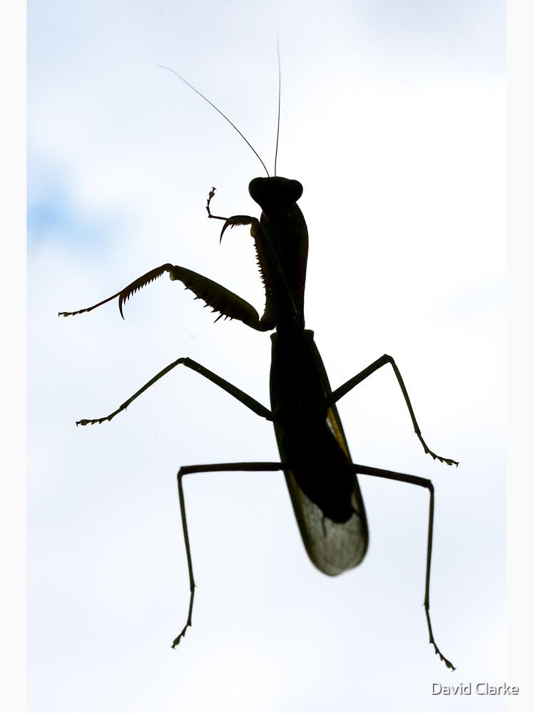 Phuket Preying Mantis by dgcphoto