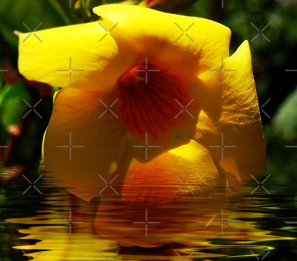 ripple by nitelite