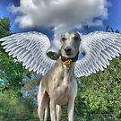 The Winged Whippet by Paul Webster
