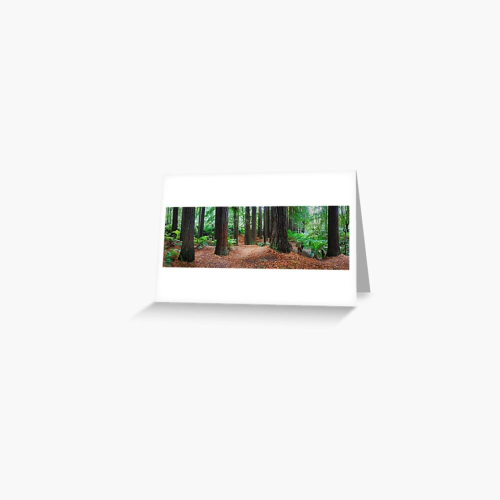 Redwood Forest, Otways, Great Ocean Road, Victoria, Australia Greeting Card
