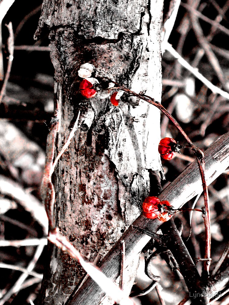 In the Red by Lyndsay81