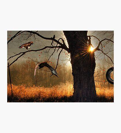 Oak and Hawks Photographic Print