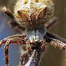 Spinne -Dinner Zeit- von Evita