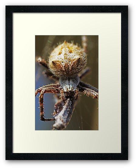 Spider -Dinner Time- by Evita