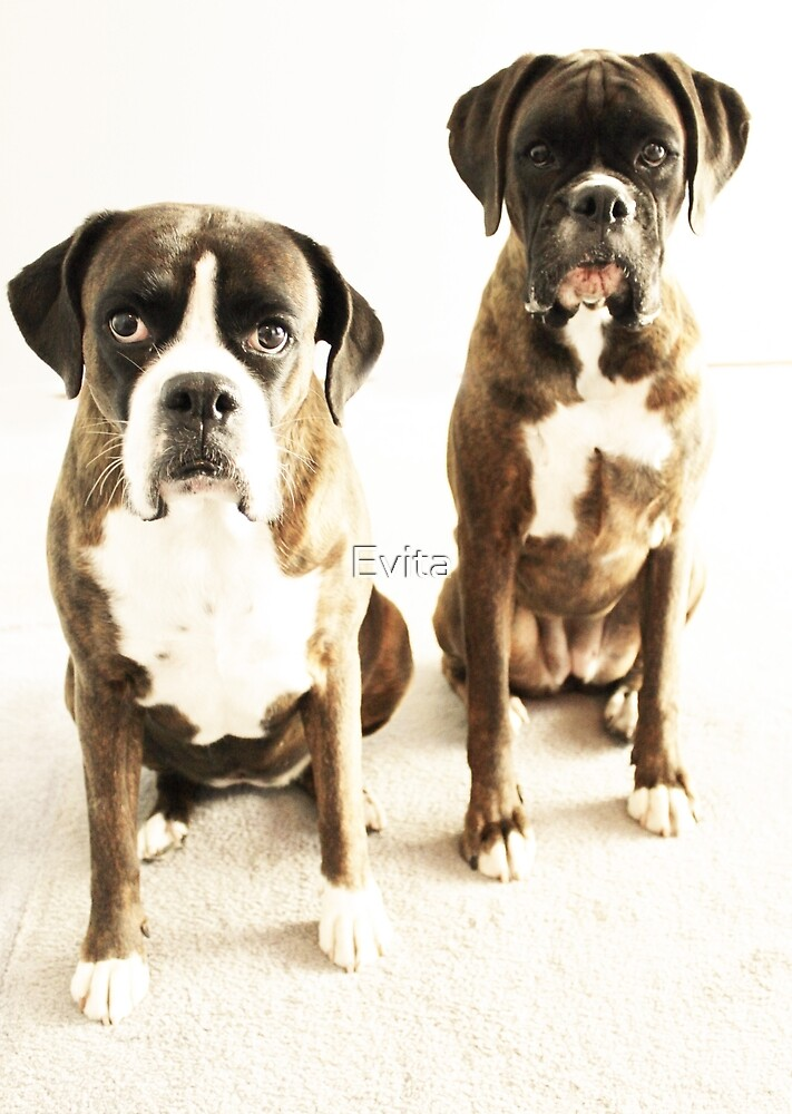 Together We Stand -Boxer Dogs Series- by Evita
