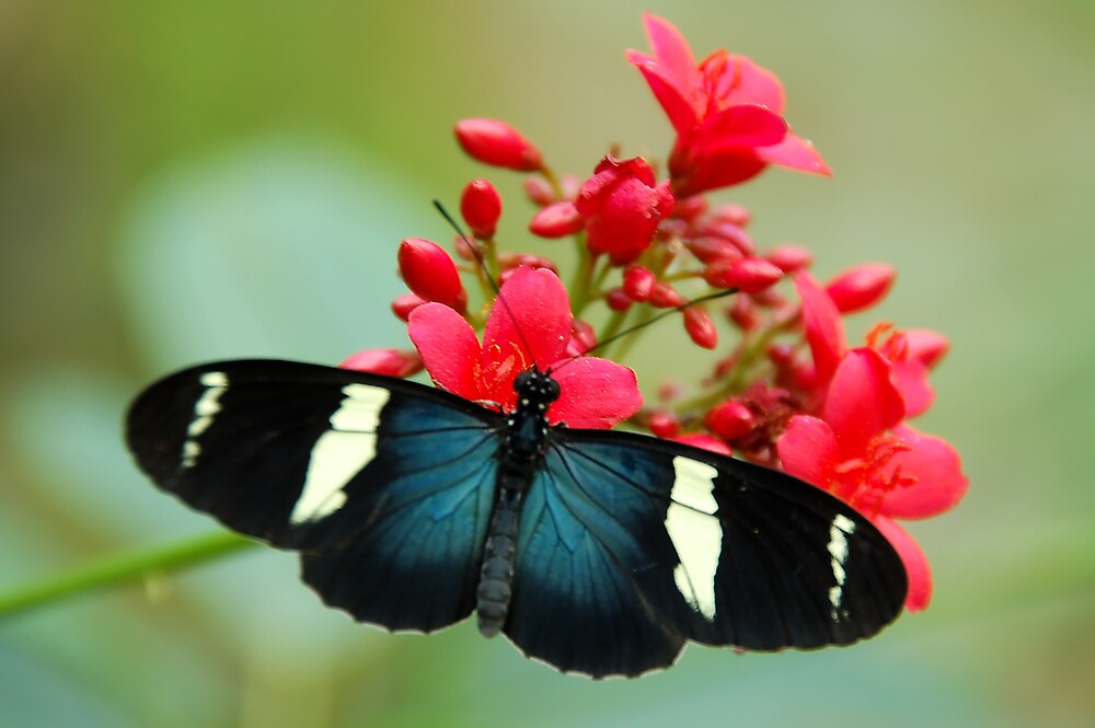 Butterfly by Eric Dush