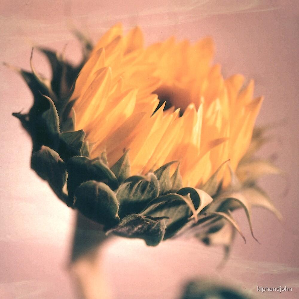 Sunflower by klphandjohn