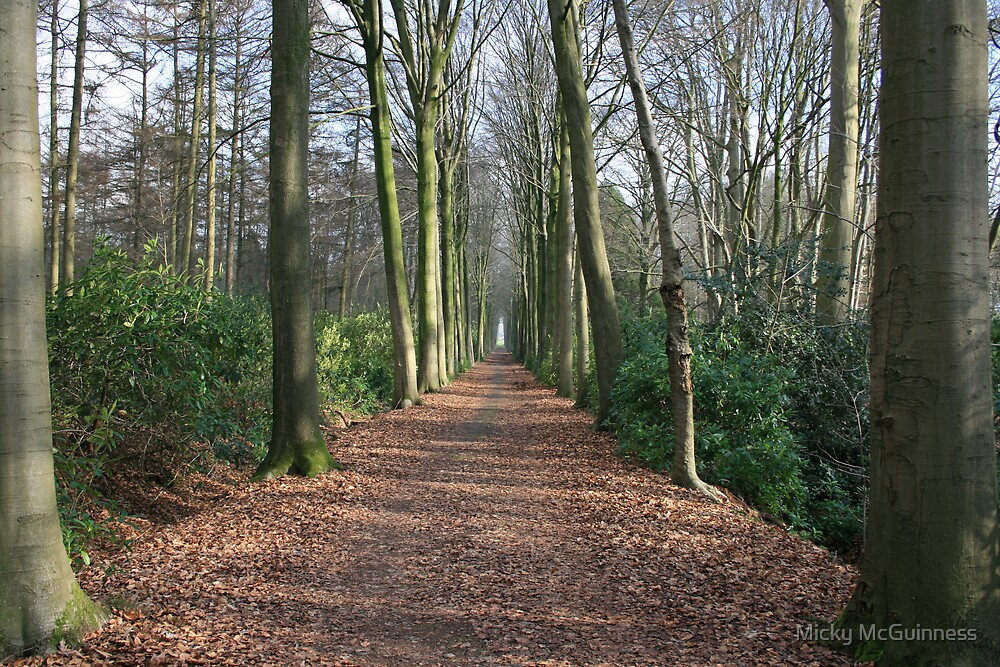 In Het Bos by Micky McGuinness