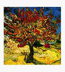 Van Gogh Mulberry Tree Photographic Print