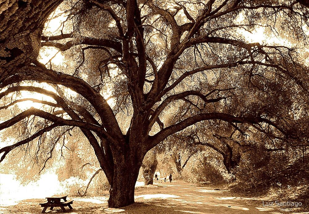 """Tree Embrace"" by Luz Santiago"