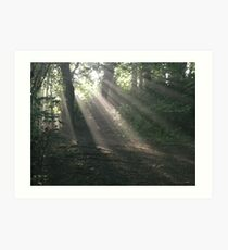 Sunlight 2, Kearsney Abbey woods Art Print