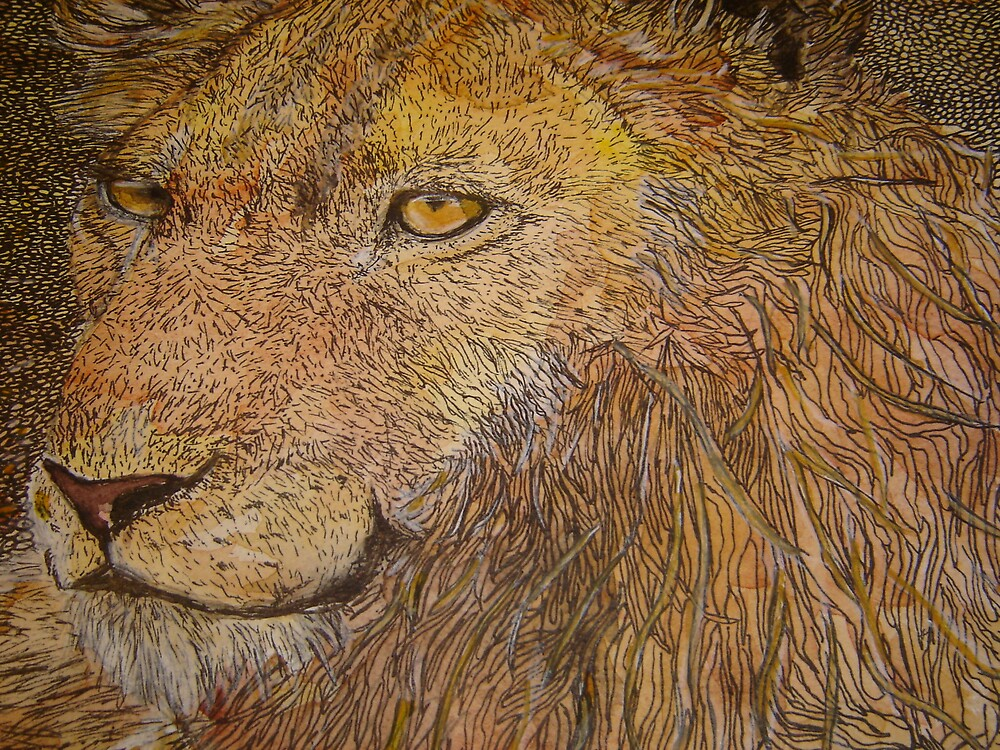 lion by margaretfraser