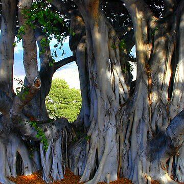 Maui Banyan by tweetkater