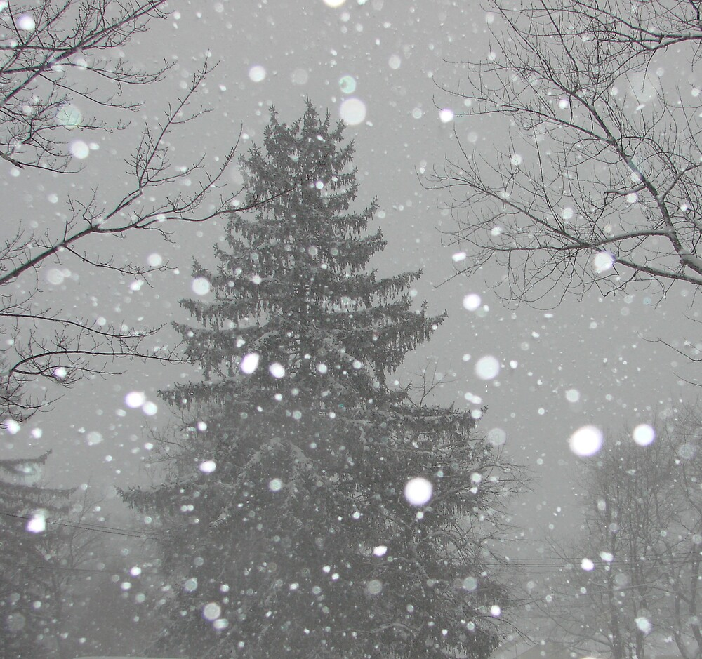 Snow by bellyta