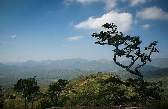 Thekkady Tree by Brent Olson