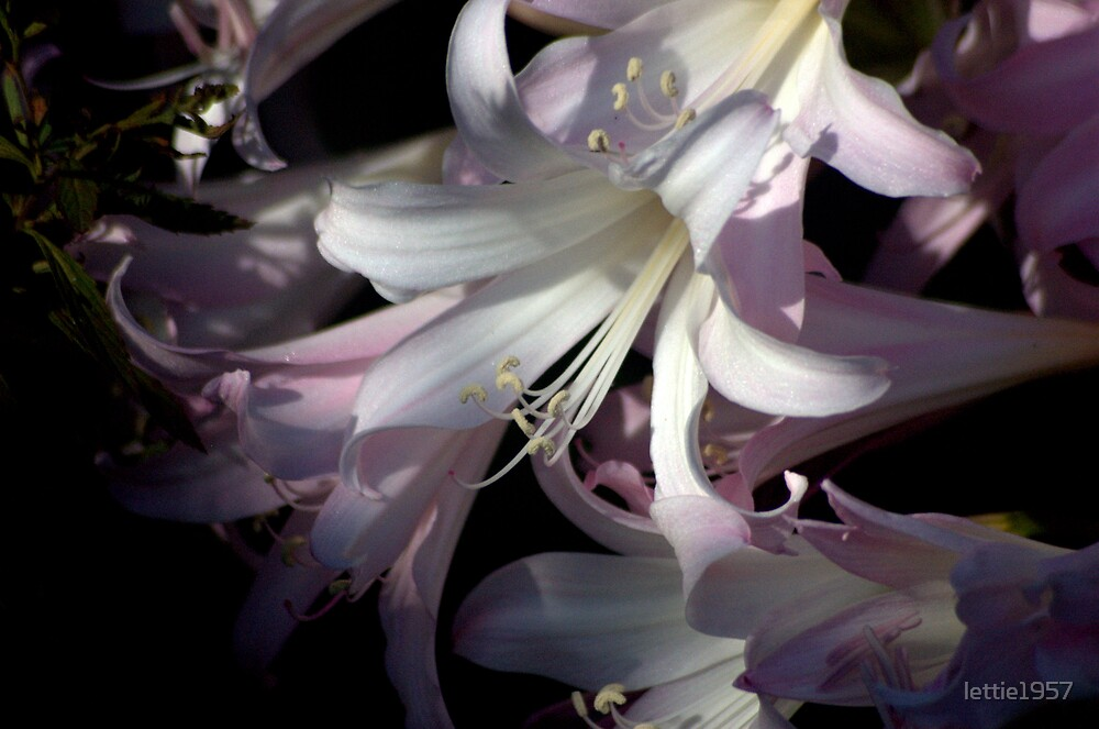 precious flower  by lettie1957