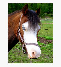 Why The Long Face? - Are You Feeling Blue? - Pinto - NZ Photographic Print