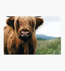 Scottish Highland Cow in Scotland Photographic Print